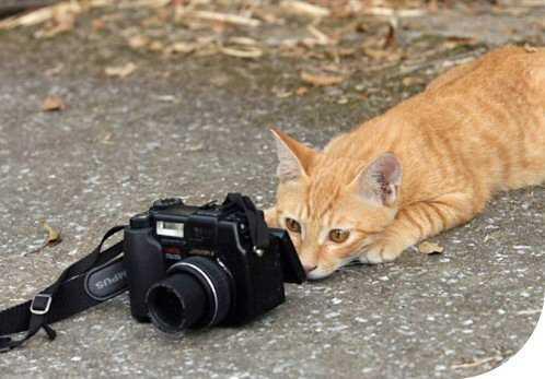 Luotettava valokuvaaja.. =p