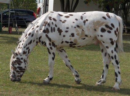 Peppi Pitkätossun Hevonen