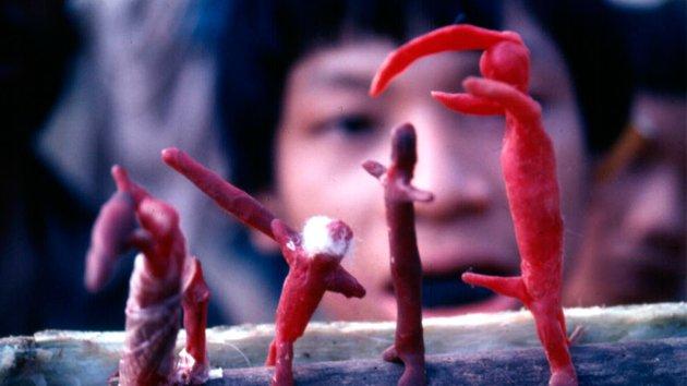 Kuva elokuvasta Secrets of the Tribe