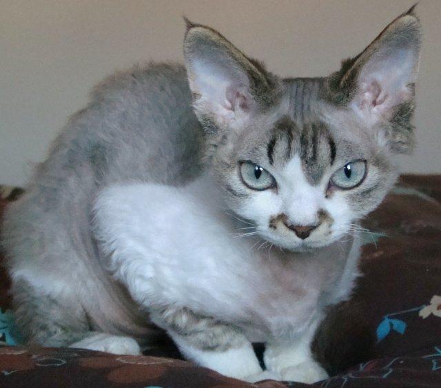 Suurinpiirtein näin juluman näköinen otus oli kissani, tuo nimetön kauhukatti