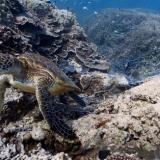 Tutustu vedenalaiseen maailmaan Google Mapsin välityksellä
