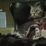 Peukalokissojen armeija ei nuku – juonittelevien kattien mainosvideo sai jatkoa