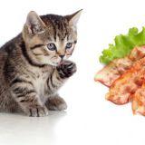 Korvaa vauvakuvat kissoilla ja pekonilla Facebookissa