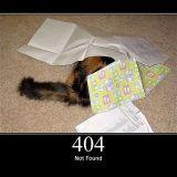 Kissat tekevät raivostuttavista HTTP-statuskoodeistakin sööttejä