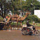 Eläintarha tiellä