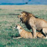 Eläimellistä seksiä