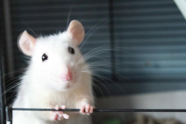 Rotta on kateellinen ihmiselle joka jolla on rahaa ja tavaraa. Ihminen on kateellinen rotalle, jonka elämä on niin helppoa ja yksinkertaista. Oma asenteeni ratkaisee annanko kateudelle valtaa.