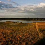 Lammassaari: Lintujen bongailua ja pitkospuita