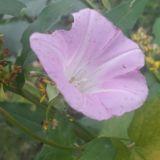 Pysähdy ihmettelemään. Katsele ympärillesi. Ota kamerakännykkä ja kuvaa vaikka kukkia. Nauti hetkestä.