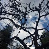 Puut syntyvät ja kuolevat. Toiset elävät pitkän elämän. Näemme paljon kaikenlaista. Rankat säät saavat meidät joskus painumaan maahan, mutta kestämme sen ja pysymme voimakkaina pystyssä.