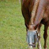 Retki Itä-Vantaalle: Kartanoita, hevosia ja luontoa