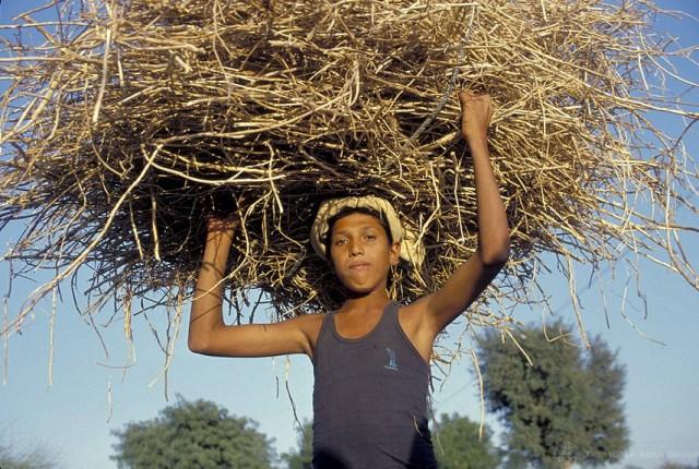 Kanna vain niin iso taakka kuin jaksat. Jos kompastut, niin taakka ei saa olla niin raskas, että kuolet sen alle. Kuva World Bank Image Collection (CC BY-NC-ND 2.0)