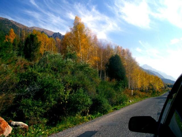 Maasto näyttää tältä heti muutaman kilometrin päässä Bishkekistä. Vastaan tulee lähinnä härkiä, vuohia ja hevosia, autoista ei tietoakaan.