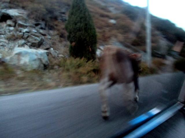 Tyypillinen kirgisialainen vastaantulija tieliikenteessä.