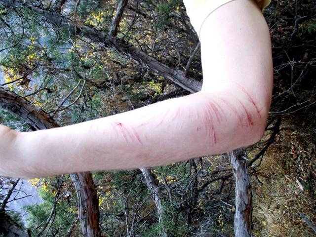Note to self: Älä tartu kaatuessasi piikkipensaaseen. Brädin käsinäyte.