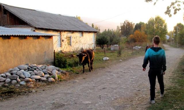 Pakollinen minä ja härkä-kuva