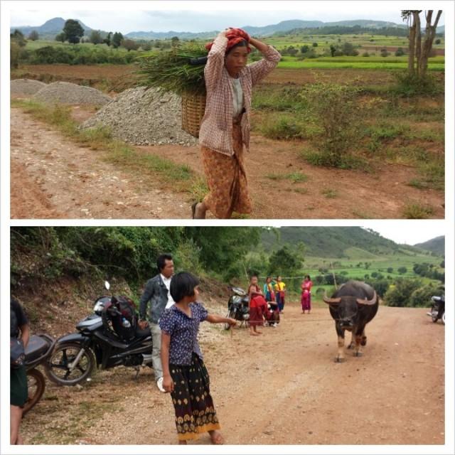 Myanmarissa naiset tekevät yleensä kaikki työt. Ei paha diili. Mitäs jos otettais suomeenkin tämä käytäntö? (vitsi)