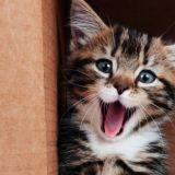 Kissanpentutrio ihastuttaa balladitulkinnallaan