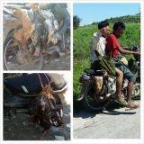 Suomessa on ihanaa kun ruoka on hygienista. Kuvassa elävien kanojen kuljetusta moottoripyörällä Myanmarissa.