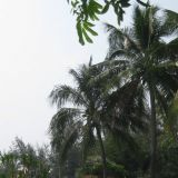 Ei hassumpi etätyöpaikka. Miljonäärielämää Thaimaassa frendin kämpiltä.