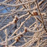 Lunta tulvillaan on raikas talvisää. Talvi ja puhtaus on yksi Suomen erityispiirteistä. Nauttikaamme talvesta.
