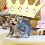 Kissanpentujen versio Leijonakuninkaasta sulattaa kyynisimmänkin sydämen