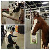 GoExpossa pääsi katsomaan laamoja ja hevosia sekä testailemaan hauskoja pyöriä.
