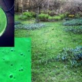 Keväisen vihreän brunssin ainekset