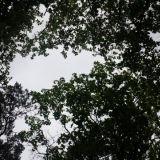 Stansvikiin saapuessa voisi luulla tulleensa landelle. Helikopteriperspektiivistä katsottuna koko stadi on metsää ja landea.