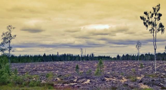 Taistelun tauottua, luonto alkaa versoa uutta elämää.