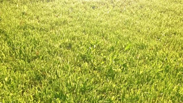 Paljaat varpaat aamukasteisella nurmikolla. Elämää.