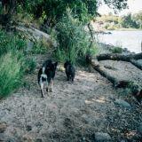 Koirien Rajasaari