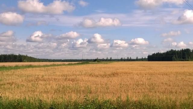 Tänään elämä on kuin viljapelto. Täynnä satoa, joka odottaa korjaajaansa.