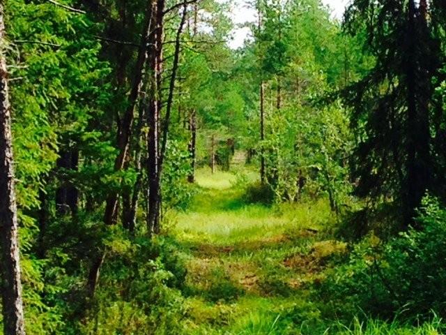 Joskus polku jota tässä hetkessä kuljen, näyttää varsin kauniilta, sisältäen myös omat haasteensa.
