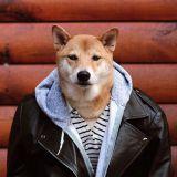 Koira, joka tienaa 15 000 dollaria kuukaudessa