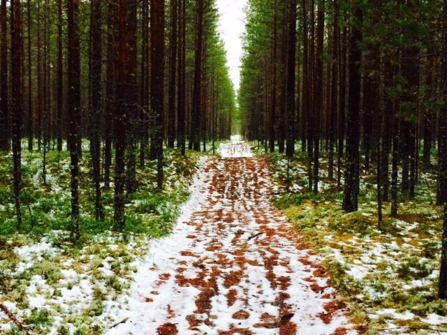 Toisinaan polku jota askellan vaikuttaa varsin helpolta astella.