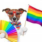Eduskunta äänesti tasa-arvoisen avioliittolain puolesta