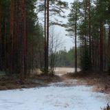 Metsä. Paikka jossa löydän sisälleni rauhan.
