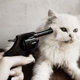 Kissa on internetin sankari, joka saa kurjaa kohtelua tosimaailmassa