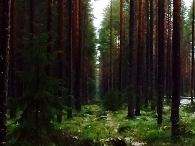 Luonto ei nuku, vaikka kuinka uneliaalta näyttäisikin.