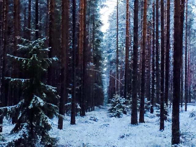 Lumipeite luonnossa on kuin kokonaan uusi maailma syntyisi.