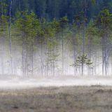 Suomalainen luonto tarvitsee puolustajansa