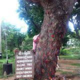Killing tree, johon on tuotu rannenauhoja uhrien muistoksi.