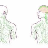 Tutkijat löysivät piuhat, jotka yhdistävät aivot ja immuunisysteemin