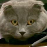 Romanialaisfirma palkkasi kissan