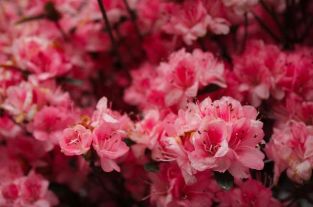 Kukkaloisto on Nykissä keväällä parhaimmillaan.