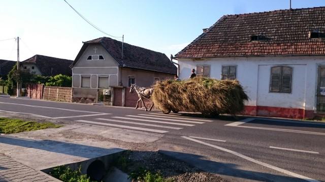 Heinät leikataan viikatteella käsityönä ja kuljetetaan hevoskuljetuksella. Koneellinen maatalous ei ole vielä tänne jokapaikkaan löytänyt.