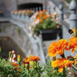 Kukkaisviikot kukittavat taas Tampereen