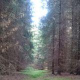 Metsäkylässä voi käydä iltakävelyllä vaikka öö no vaikka metsässä.