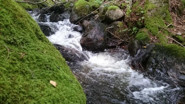 Myllyjärvi laskee Risslan koskeen. Näin kesällä koski oli aika kuiva, mutta oli vettä vielä vähän. Ei ihme, että aikanaan Risslan patoa tarvittiin veden säännöstelemiseksi.